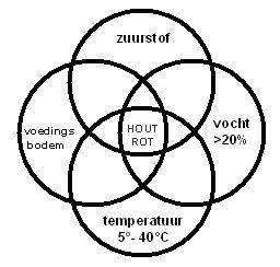 houtrot2.jpg